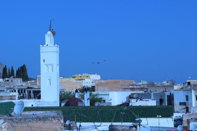Gastspielreise Marokko: Störche in Sefrou (Photo: suite42)